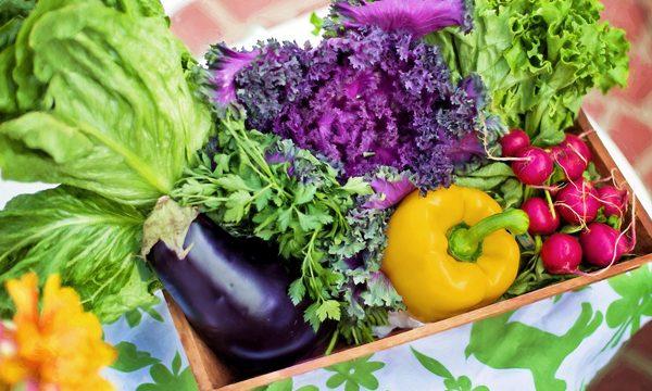 Wyznaczenie trwałości zuwzględnieniem doboru opakowań wcelu ograniczenia marnotrawstwa żywności